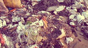 Закон о вывозе мусора
