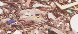 Цены на вывоз мусора в Крекшино