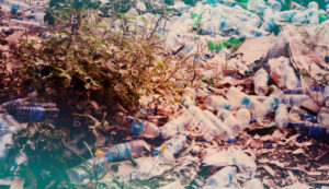 Срочный вывоз мусора во Фрязино