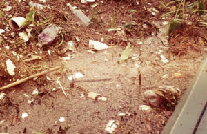 Вывоз мусора в Тучково круглосуточно
